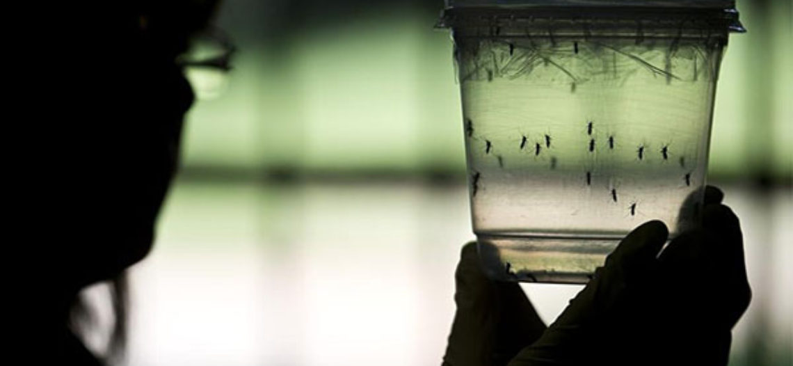 MAJOR ZIKA FAIL! FEDS BUSTED FOR 'LAZY' RESPONSE